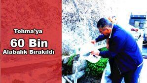 Tohma'ya 60 Bin Balık Bırakıldı
